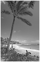 Palm tree, Sheraton Beach, mid-day. Kauai island, Hawaii, USA (black and white)