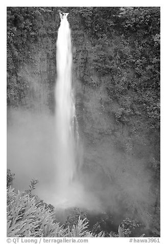 Akaka Falls on Kolekole stream. Akaka Falls State Park, Big Island, Hawaii, USA (black and white)