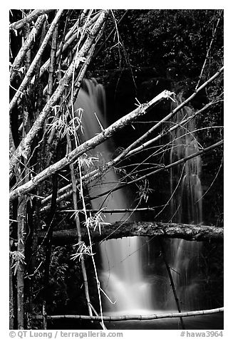 Bamboo branches and waterfall. Akaka Falls State Park, Big Island, Hawaii, USA (black and white)