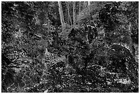 Lava mold of tree trunk, Lava Trees State Monument. Big Island, Hawaii, USA (black and white)