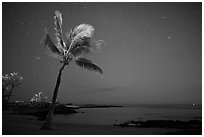 Palm tree ocean under sky with stars, Kaloko-Honokohau National Historical Park. Big Island, Hawaii, USA (black and white)