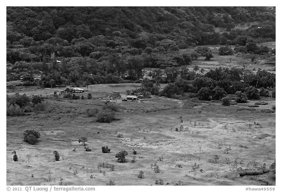 Valley farmlands from above, Waipio Valley. Big Island, Hawaii, USA (black and white)