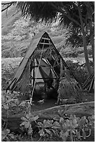 Hut, Waipio Valley. Big Island, Hawaii, USA (black and white)