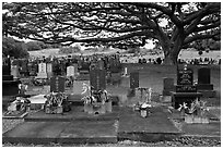 Graves under large tree, Hilo. Big Island, Hawaii, USA (black and white)
