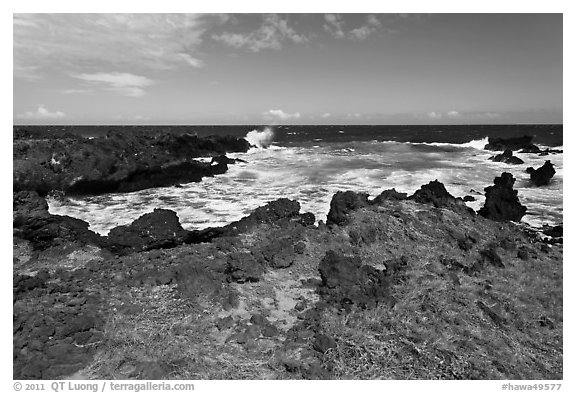 Grasses and volcanic shore, South Point. Big Island, Hawaii, USA (black and white)