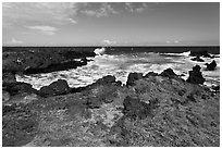 Grasses and volcanic shore, South Point. Big Island, Hawaii, USA ( black and white)