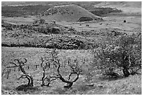 Grassy volcanic hills. Big Island, Hawaii, USA (black and white)
