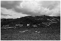Words made with light rocks against dark lava rocks. Big Island, Hawaii, USA ( black and white)