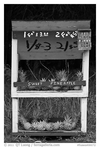 Self-serve fruit stand with pineapples. Maui, Hawaii, USA (black and white)