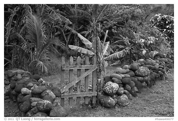 Tropical garden delimited by low stone walls. Maui, Hawaii, USA (black and white)