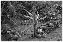 Tropical garden delimited by low stone walls. Maui, Hawaii, USA ( black and white)