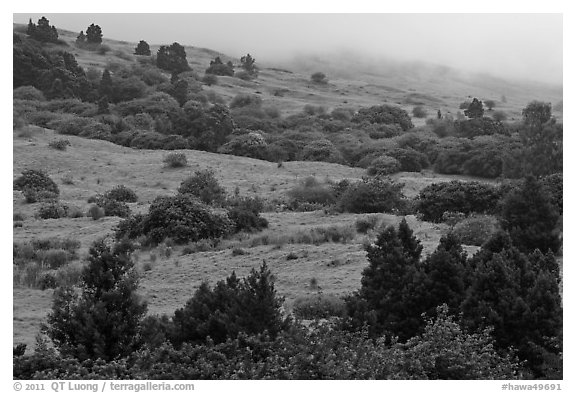Cool hills above Keokea Park. Maui, Hawaii, USA (black and white)