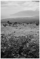 West Maui seen from high country hills. Maui, Hawaii, USA ( black and white)