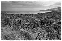 Mamalu Bay seen from verdant hills. Maui, Hawaii, USA (black and white)