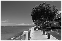 Waterfront promenade. Lahaina, Maui, Hawaii, USA ( black and white)