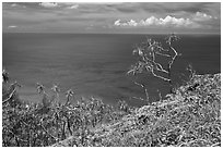 Ocean view from Kalalau trail. Kauai island, Hawaii, USA (black and white)