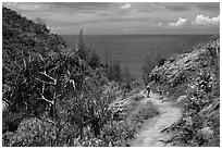 Hiking Kalalau trail. Kauai island, Hawaii, USA (black and white)
