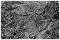 Kalalau trail. Kauai island, Hawaii, USA (black and white)