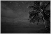 Palm tree, stars and ocean. Kauai island, Hawaii, USA ( black and white)