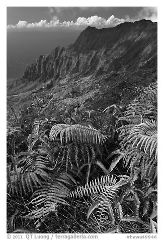 Ferns and Na Pali Cliffs, see from Kokee Mountain Park. Kauai island, Hawaii, USA (black and white)