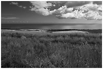 Grasses and ocean. Kauai island, Hawaii, USA (black and white)