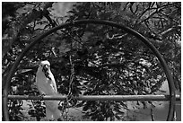 White parrot, Kilauea. Kauai island, Hawaii, USA ( black and white)