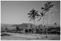 Golf course with palm trees, Punaluu. Big Island, Hawaii, USA (black and white)