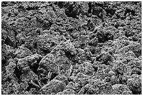 Ferns and lava rocks covered with moss. Big Island, Hawaii, USA (black and white)