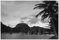 Yachts anchored in Pago Pago harbor. Pago Pago, Tutuila, American Samoa (black and white)