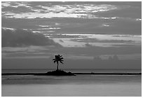 Lone palm tree on a islet in Leone Bay, dusk. Tutuila, American Samoa (black and white)
