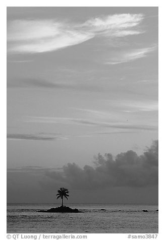 Lone coconut tree on a islet in Leone Bay, sunset. Tutuila, American Samoa (black and white)