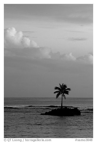 Lone palm tree on a islet in Leone Bay, sunset. Tutuila, American Samoa (black and white)