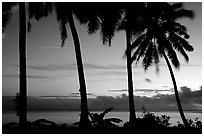 Palm trees at sunset, Leone Bay. Tutuila, American Samoa (black and white)