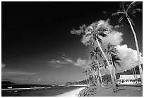 Palm-lined beach in village of Auasi. Tutuila, American Samoa ( black and white)