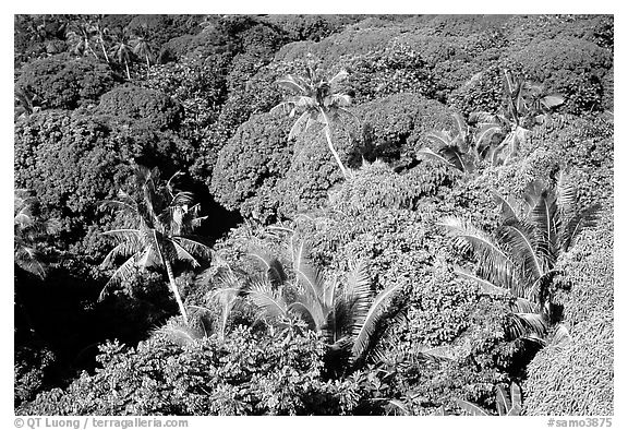 Tropical vegetation. Aunuu Island, American Samoa (black and white)