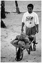 Villager carying coconuts in a wheelbarel. Tutuila, American Samoa (black and white)