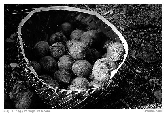 Coconuts contained in a basket made out of a single palm leaf. Tutuila, American Samoa (black and white)