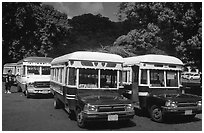 Decorated aiga busses, Pago Pago. Pago Pago, Tutuila, American Samoa (black and white)