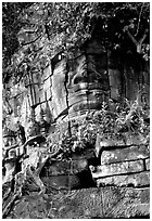 Stone face invaded by vegetation, Angkor Thom complex. Angkor, Cambodia (black and white)