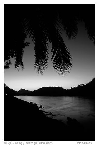 Sunset on the Mekong river framed by coconut trees, Luang Prabang. Mekong river, Laos (black and white)