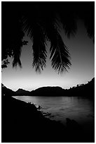 Sunset on the Mekong river framed by coconut trees, Luang Prabang. Mekong river, Laos ( black and white)