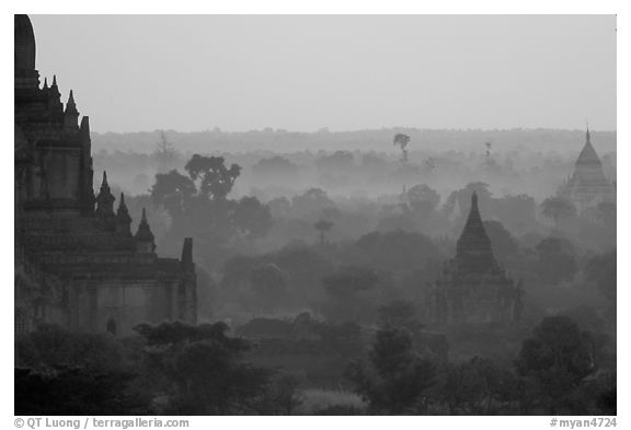 Receeding lines through the dawn mist. Bagan, Myanmar (black and white)