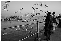 Seagulls flying as monks feed them from Botataung pier. Yangon, Myanmar ( black and white)