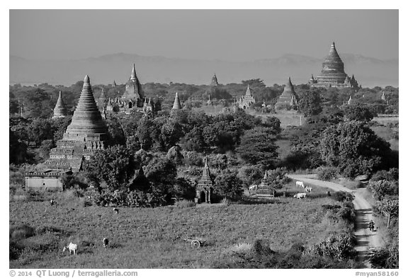 Rural scene with cattle and peasants working in fields below pagodas. Bagan, Myanmar (black and white)
