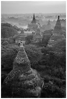 Aerial view of ancient temples. Bagan, Myanmar ( black and white)