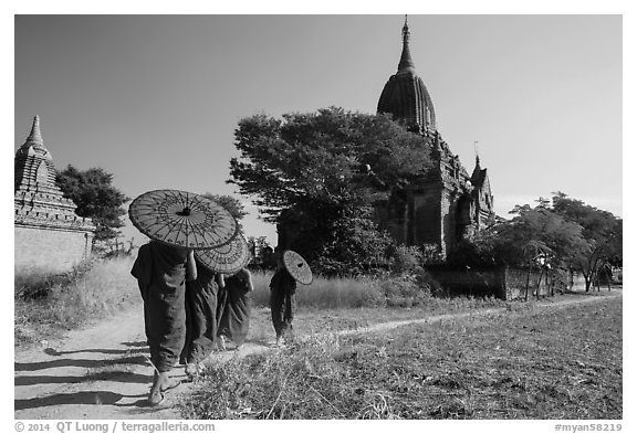 Young Buddhist monks holding red sun umbrellas walk towards temple. Bagan, Myanmar (black and white)