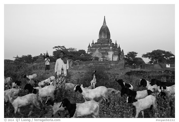 Sheep herder in front of temple, Minnanthu village. Bagan, Myanmar (black and white)