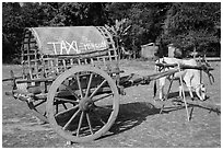 Ox cart marked as taxi, Mingun. Myanmar ( black and white)