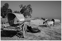 Ox carts on shore of Irrawaddy River, Mingun. Myanmar ( black and white)