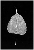 Leaf made of gold. Mandalay, Myanmar ( black and white)